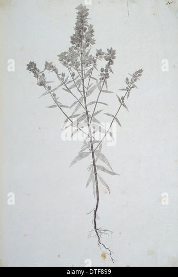 Madras Nature Print - Stock Image