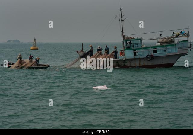 pearl river delta dolphin