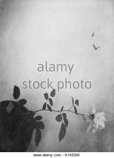 Black and white' - Stock Image