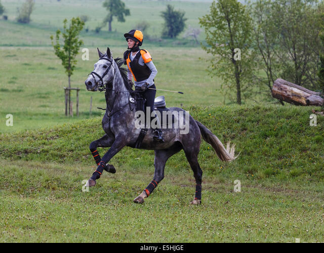 Young woman, show jumping with a Holsteiner horse, Crawinkel, Thuringia, Germany - Stock Image