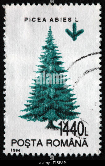 1994 Posta Romana tree 1440L Picea Abies L pine Stamp - Stock Image