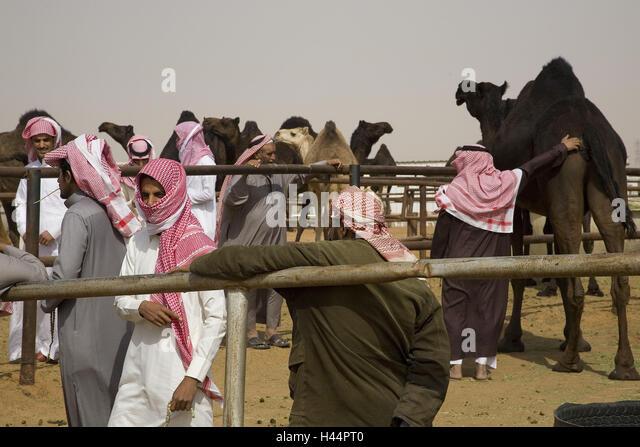 Saudi Arabia, province Riyadh, Riyadh, camel market, - Stock Image