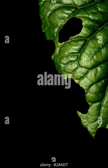 Green plant. Leaf face. 2008 - Stock-Bilder
