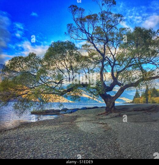 The tree by the lake. - Stock Image