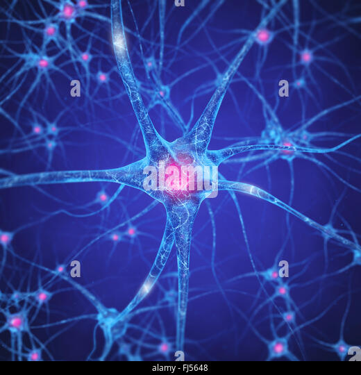Neural network , Brain cells , Human nervous system , Neurons - Stock Image