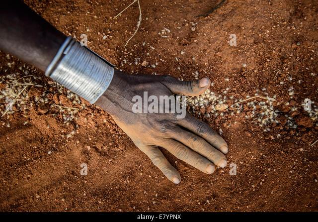 At West Gate Conservancy in Northern Kenya, Samburu women chop down Acacia reficiens, a n invasive species that - Stock Image