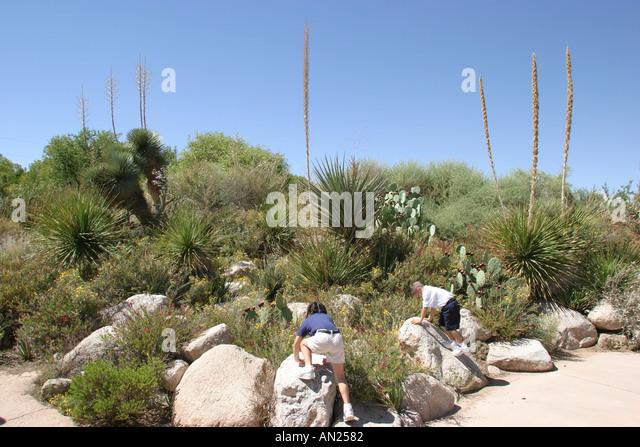 New Mexico Albuquerque Biological Park Rio Grande Botanic Garden Native Garden W - Stock Image