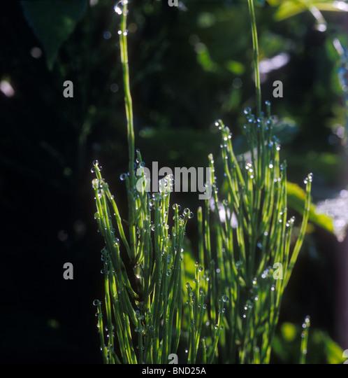 Morning dew. - Stock-Bilder