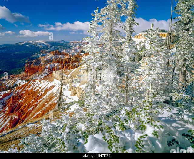 Iced forest on the rim, Cedar Breaks National MOnument, Utah, Markagunt Plateau, Engelmann sprice and subalpine - Stock-Bilder