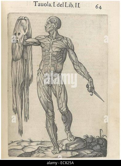 Print from 'History of the composition of the human body' - Stock Image