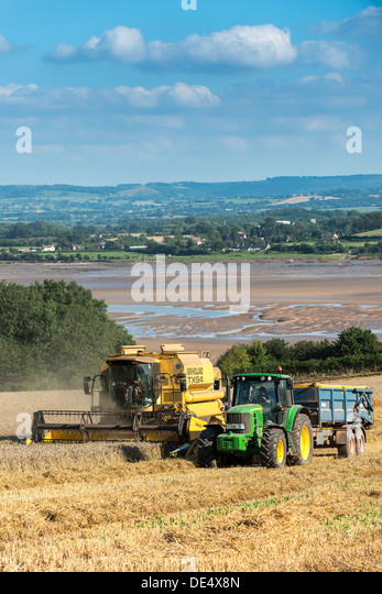 Combine harvester pouring harvested grain into trailer towed by tractor in field on bank of River Severn, Glos.at - Stock Image
