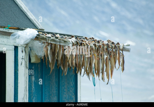 Fish drying at the Inuit village of Tiniteqilâq, Sermilik Fjord, East Greenland - Stock Image