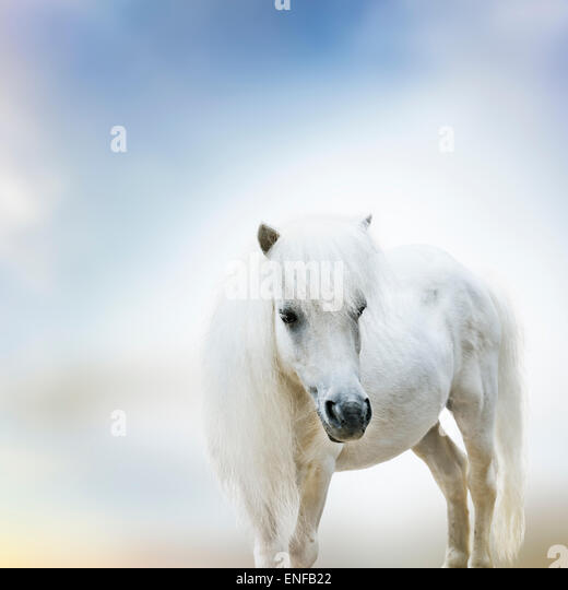 Portrait Of Cute White Pony - Stock Image