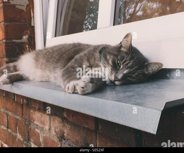 Tabby cat stretched out on window sill - Stock-Bilder