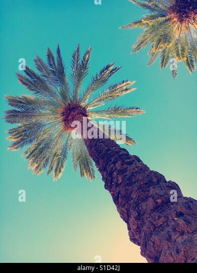 Palm trees - Stock-Bilder
