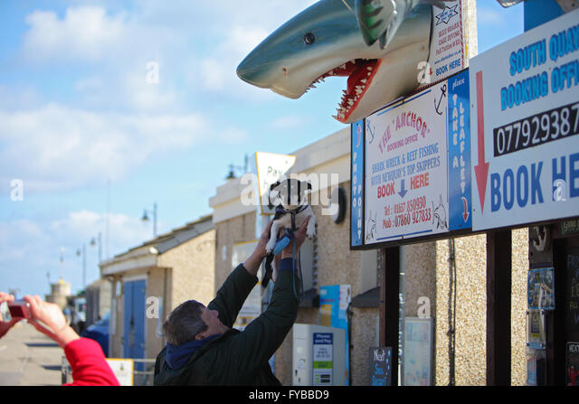 NEWQUAY, CORNWALL, UK - APRIL 24, 2016: A man holds up his dog towards a model of a shark in Newquay Harbour while - Stock Image