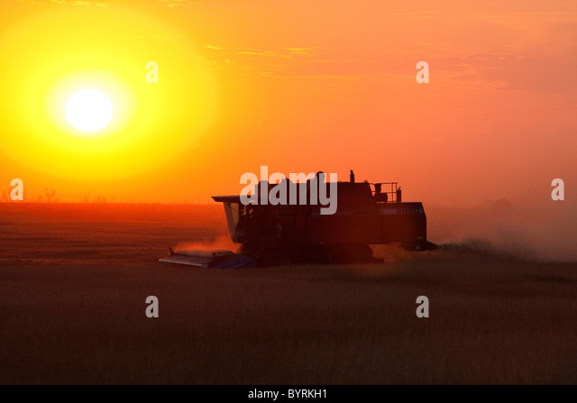 Agriculture - Silhouetted combine harvesting wheat at sunset / Alberta, Canada. - Stock Image