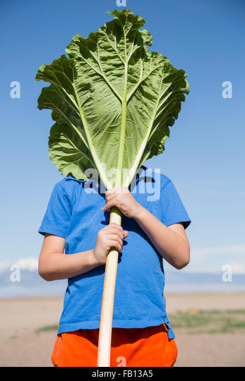 Portrait of boy (6-7) hiding behind large rhubarb leaf - Stock Image