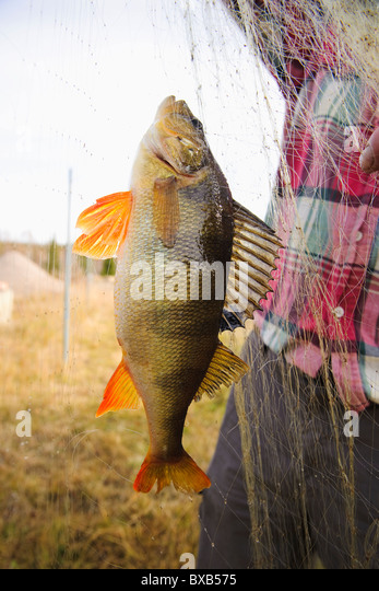 Fisherman holding fishing net with fish - Stock Image