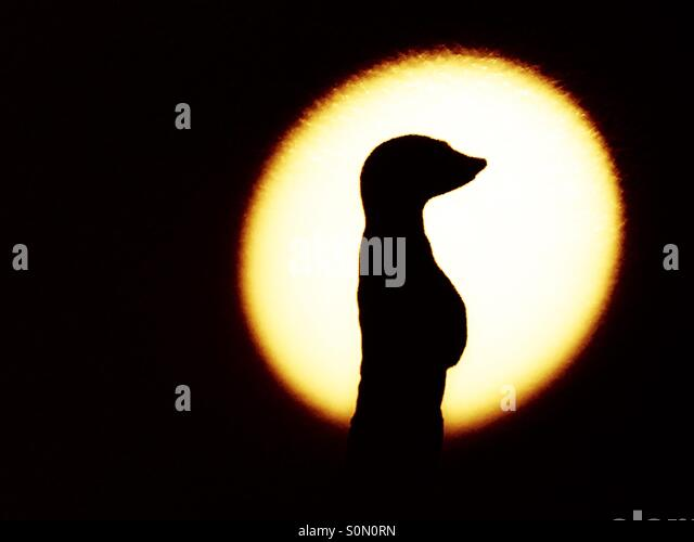 Shadow of a Meerkat statue - Stock Image