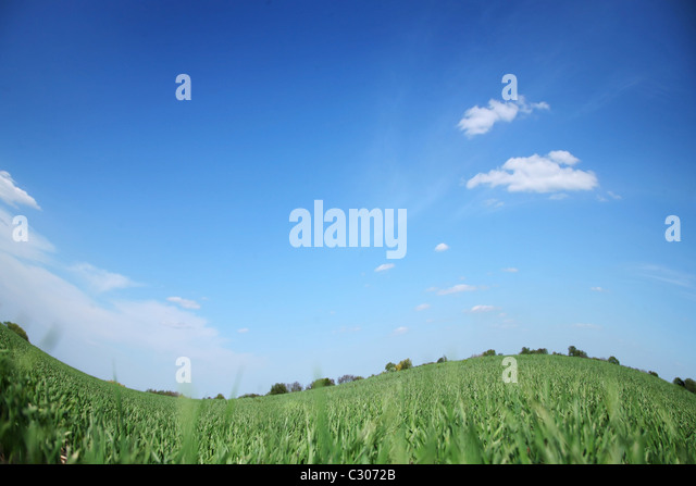 Green field and bly cloudless sky. - Stock-Bilder