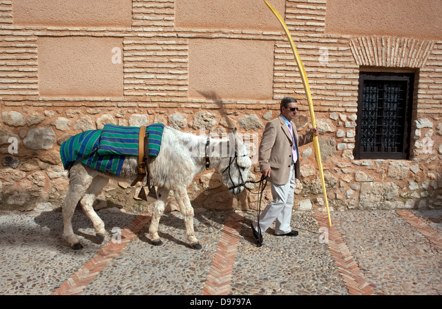 Easter in Campo de Calatrava. A man takes the donkey used in the Palm Sunday Procession - Stock Image