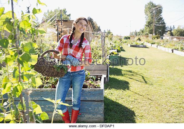 Woman carrying vegetable basket in community garden - Stock Image