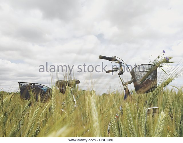 Bicycle In Wheat Field Against Sky - Stock Image