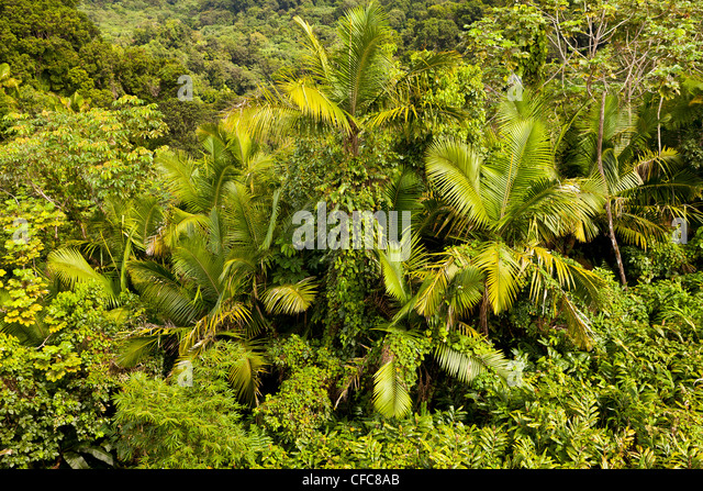 EL YUNQUE NATIONAL FOREST, PUERTO RICO - Rain forest jungle canopy landscape. - Stock Image