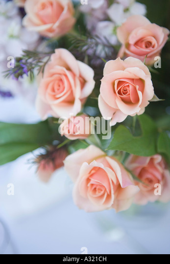 Bouquet of prink roses - Stock-Bilder