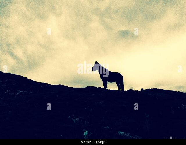 Silhouette of horse in landscape - Stock-Bilder
