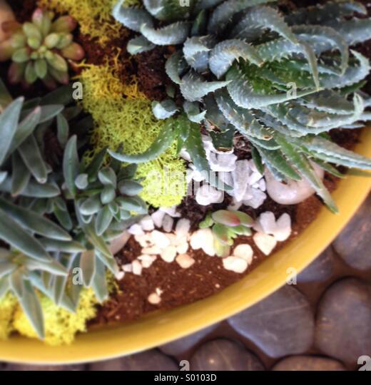 Planter of succulent plants. - Stock Image