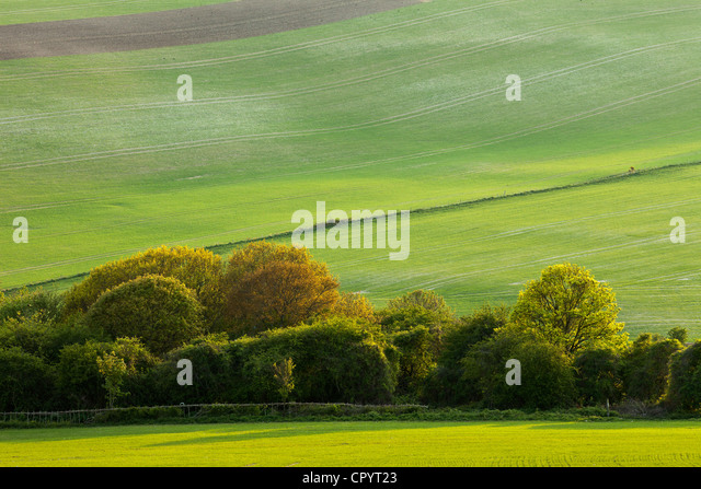 South Downs National Park near Lewes, East Sussex, England. - Stock-Bilder