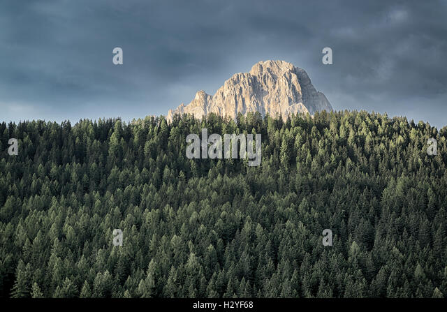 The top of Langkofel sunlit with thick pine forest below - Stock Image