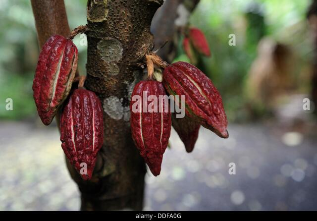 Parfums stock photos parfums stock images alamy for Jardin 4 epices