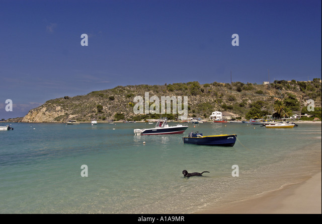 Anguilla beach at Sandy Ground boats with dog swimming in water - Stock Image