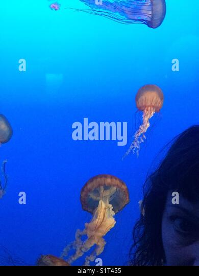 Nettle jelly fish & woman - Stock Image