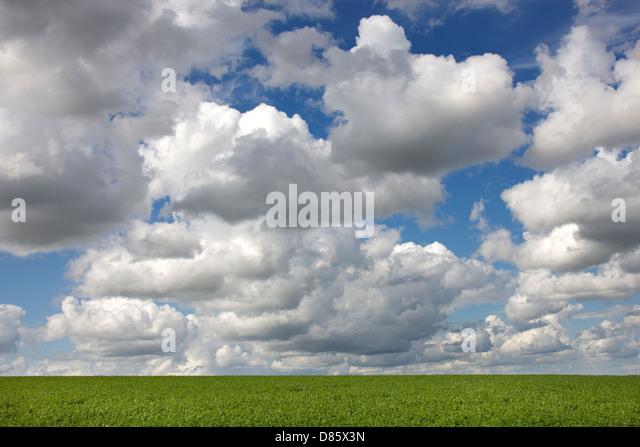 Cumulus mediocris clouds over field - Stock Image