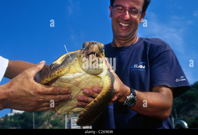 Local fishermen deliver a turtle caretta to a C.R.A.M. member for the extraction of  a fishhook. Blane. Barcelona - Stock Image
