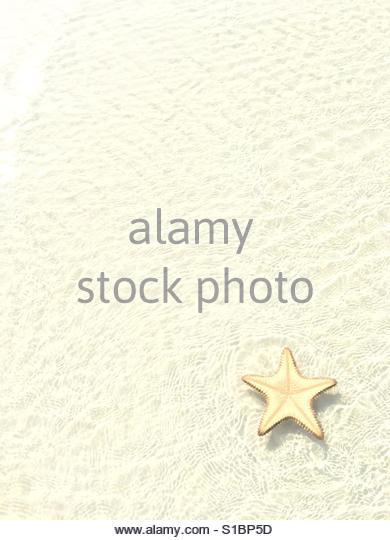 Sea star at the beach - Stock Image