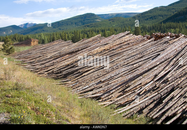 Miles of felled forest trees - commercial logging in Livingstone valley Rocky Mountains Alberta Canada - Stock Image