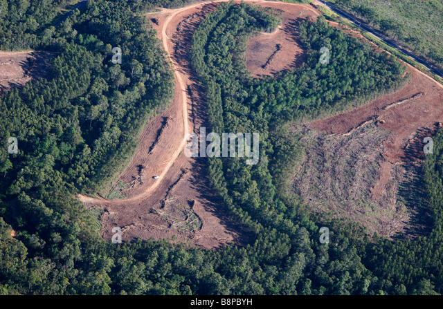 deforestation - Stock Image