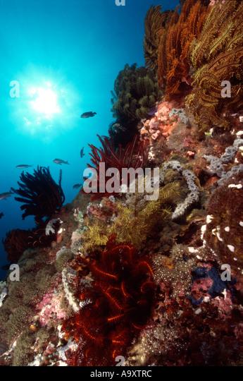 Seascape - Stock Image