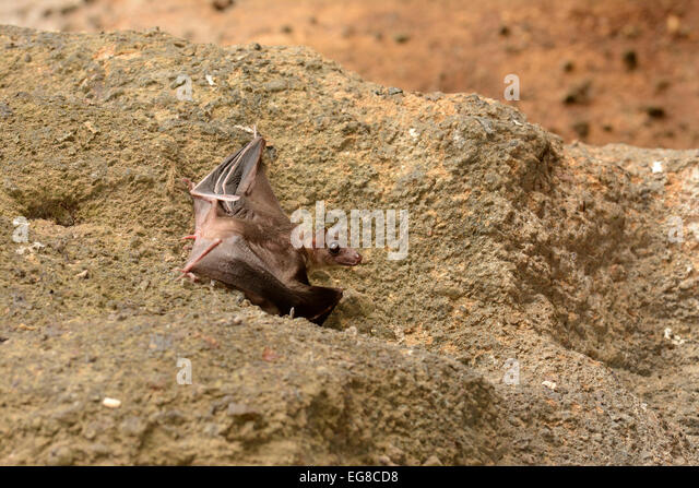 bat cave singles dating site Archaeological excavations at cowboy cave uncovered items dating back to the early archaic period 7400-5100 bc.