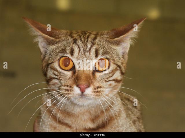 Cats Eyes Stock Photos...