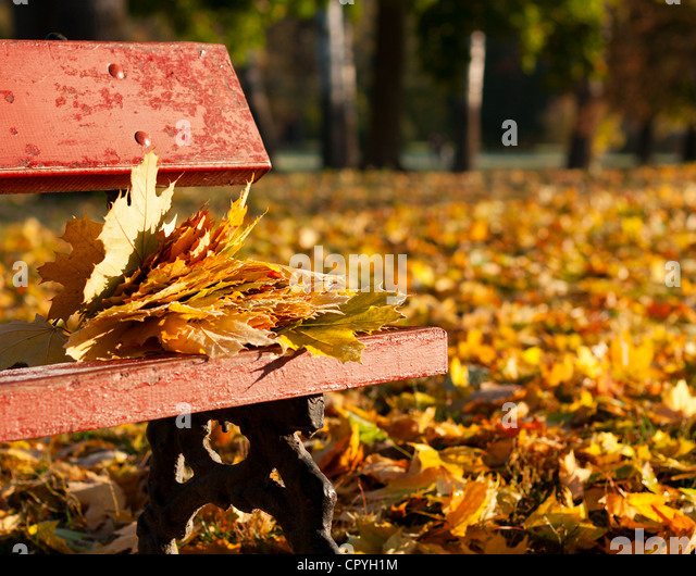 Maple leaves on a bench in the park. Autumn Landscape - Stock Image