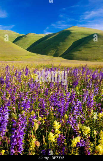 Acres of wildflowers in the Piano Grande near Castelluccio, part of the Monti Sibillini National Park, Umbria Italy - Stock-Bilder