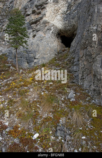 Entrance to grizzly bear den on side of mountain.  Yukon Territory, Canada. - Stock Image