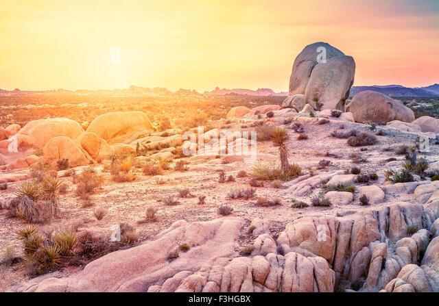 Sunset over desert in Joshua Tree National Park, California, USA. - Stock-Bilder