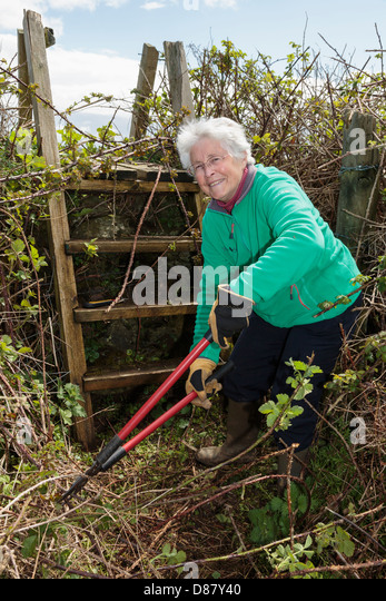 Active retired pensioner retiree Ramblers footpath volunteer worker clearing a country path and ladder stile blocked - Stock Image